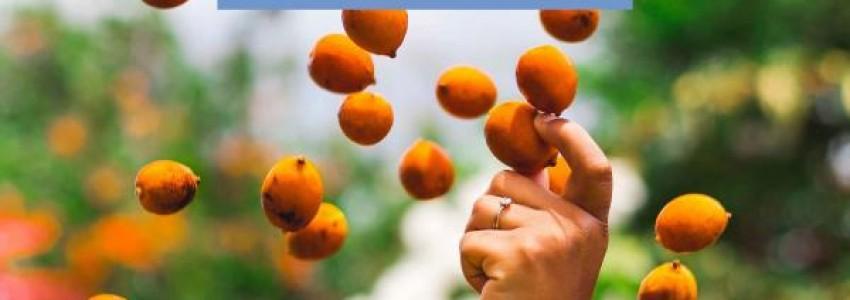 Journées Goût et Saveurs 2021 en Guyane