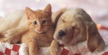 Chenil de la colline pension pour chiens